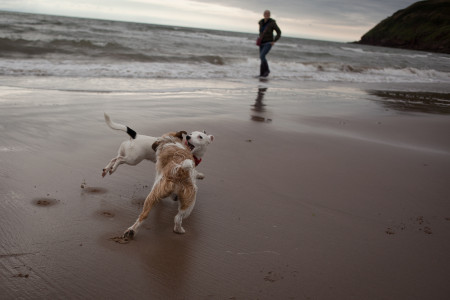 Poppy playing at the beach with her Cumbrian friend Pushkin.